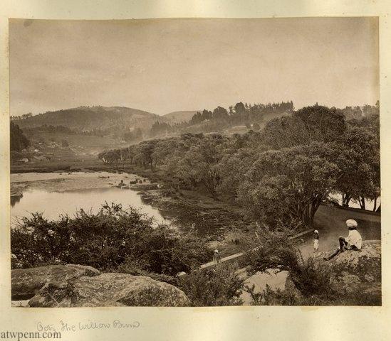 The Willow Bund